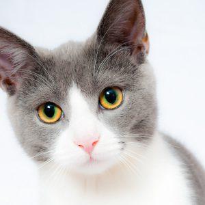 7 Tk Barf für Katzen