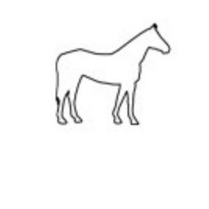 54 Pferd